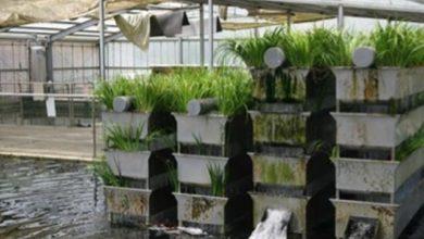 Photo of Hệ thống lọc Bakki shower cho hồ koi và Bacteria House