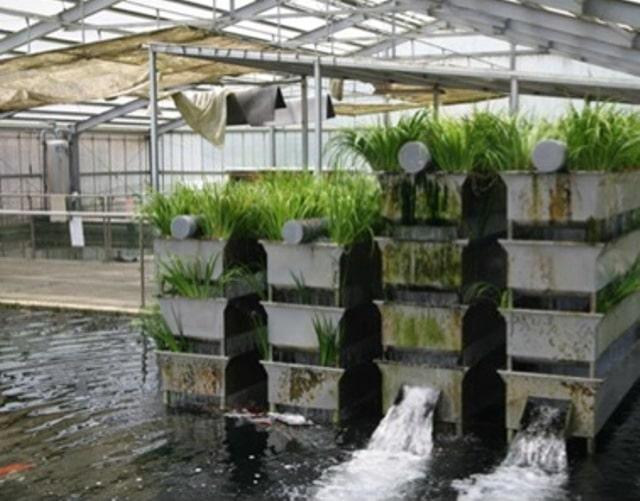 Hình ảnh hệ thống lọc Bakki Shower