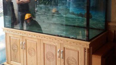 Photo of Bể cá rồng gỗ sồi cột tiện 1,55m