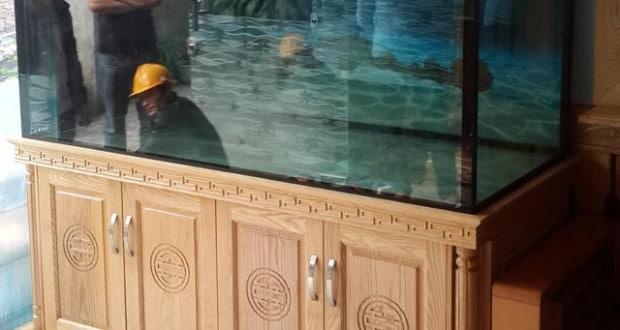 Hình ảnh bể cá rồng với công nghệ mới nhất