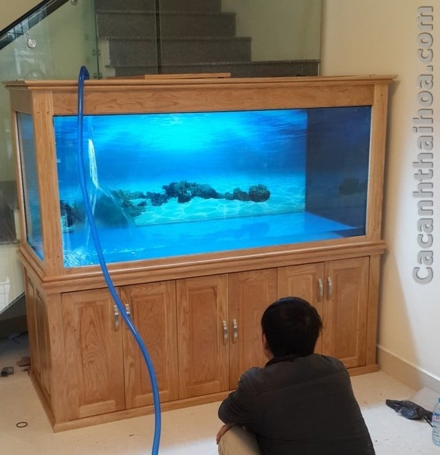 Hình ảnh bể cá rồng cao cấp