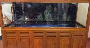 Hình ảnh bể cá rồng 2,31m