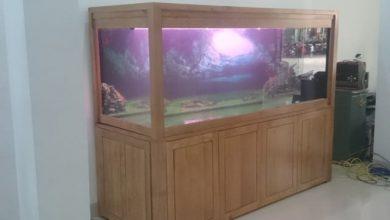 Photo of Bể cá rồng anh Tiến – Hòa Bình
