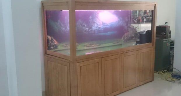 Hình ảnh bể cá rồng gỗ sồi Nga