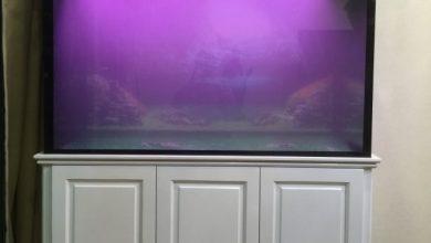 Photo of Mẫu bể cá rồng sơn trắng phù hợp nội thất hiện đại