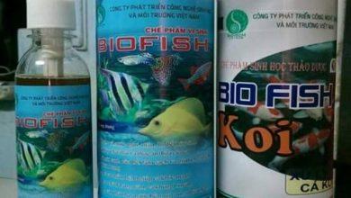 Photo of Men Vi sinh cho bể cá rồng – bể thủy sinh – hồ cá koi