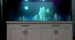 Hình ảnh bể nuôi cá rồng chuyên nghiệp