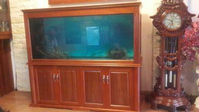 Photo of Bể cá rồng gỗ xoan đào tuyệt đẹp.