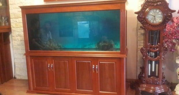 Hình ảnh mẫu bể cá rồng mới