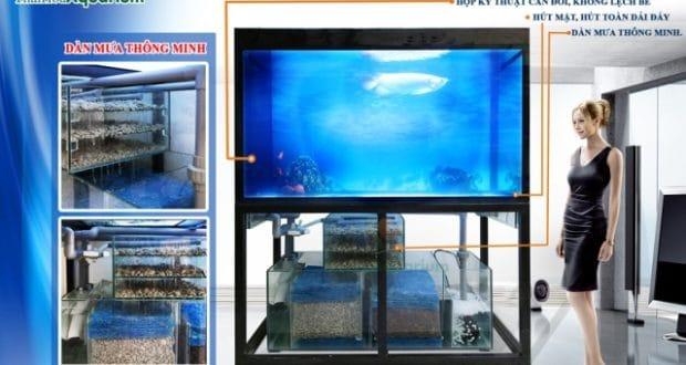 Hình ảnh mô tả công nghệ bể cá rồng mới nhất