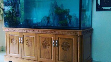 Hình ảnh bể nuôi cá rồng cao cấp