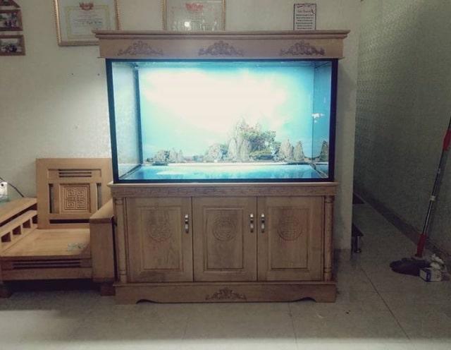 Hình ảnh Bể cá rồng thi công tại Ecopark