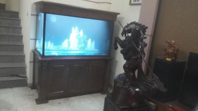 Hình ảnh bể cá rồng thi công tại Nguyễn Cơ Thạch