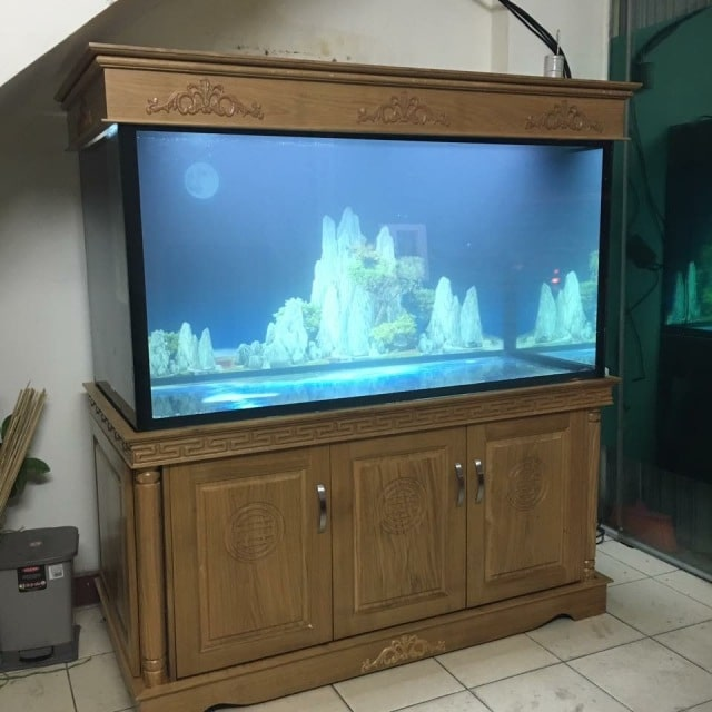 Hình ảnh bể cá rồng thi công tại Tân Mai