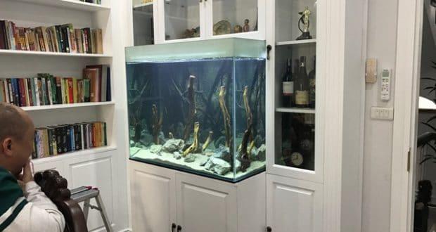 Hình ảnh bể nuôi cá ali