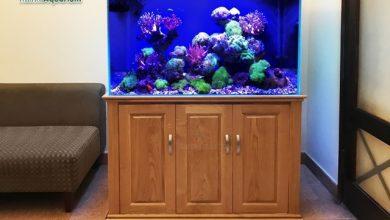 Photo of Bể cá cảnh biển 107cm