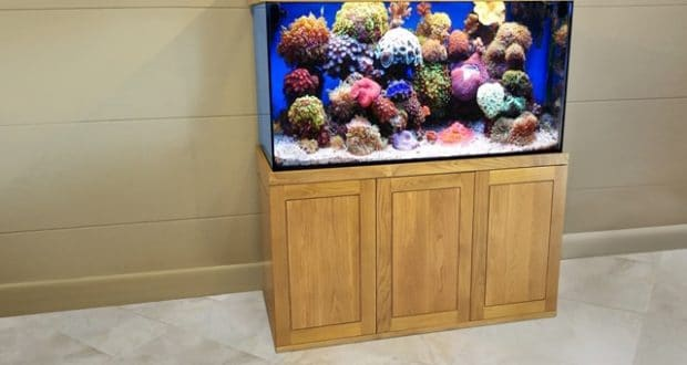 Hình ảnh bể cá nước mặn