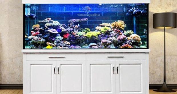 Hình ảnh Bể cá biển tại Royal city