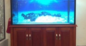 Hình ảnh bể cá rồng khung lim vỏ xoan đào