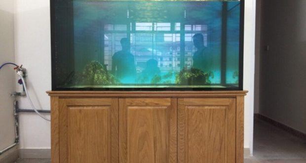 Hình ảnh bể cá rồng