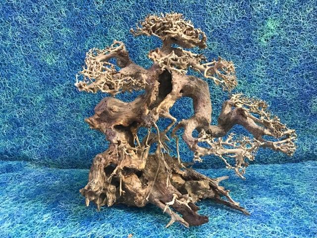 Hình ảnh Mẫu lũa bonsai số 03