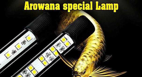 Hình ảnh Đèn Led vàng cho cá rồng Kim Long