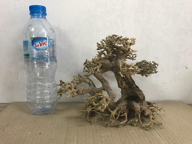 Hình ảnh lũa bonsai cho bể thuỷ sinh