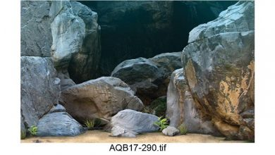 Photo of Tranh 3D vách đá cho bể cá ali