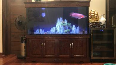 Hình ảnh bể cá rồng gỗ Hương đẹp tuyệt