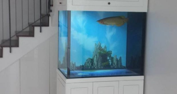 Hình ảnh bể cá cảnh cao cấp