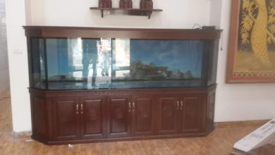 Photo of Bể cá rồng lục giác lắp tại TP. Bắc Cạn