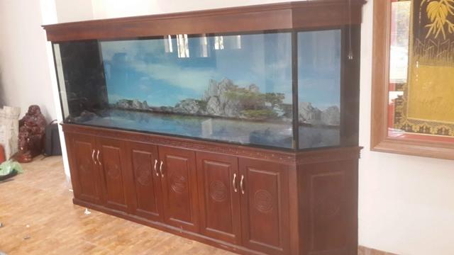 Hình ảnh bể nuôi các loại cá rồng cao cấp