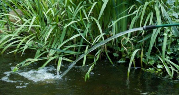 Hình minh hoạ thay nước hồ cá