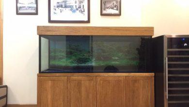 Hình ảnh Mẫu bể cá rồng hiện đại được thi công bởi Thái Hoà
