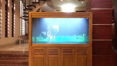 Photo of Bể cá rồng 150x60x81 thi công tại Sóc Sơn