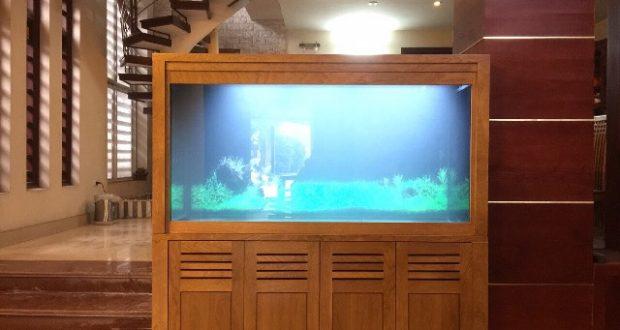 Hình ảnh Mẫu bể cá rồng chất liệu khung Lim vỏ sồi
