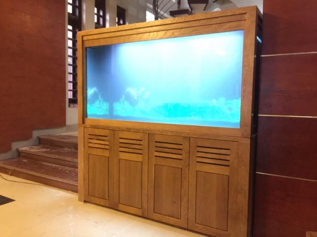 Hình ảnh Bể cá rồng được thi công bởi Thái Hoà Aquariums