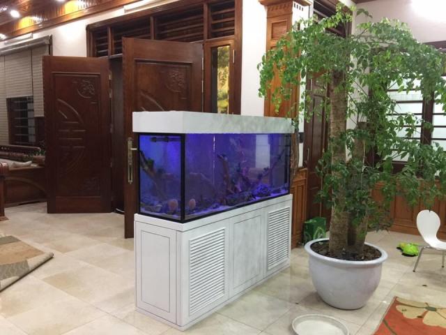 Hình ảnh Bể cá Đĩa thi công tại Ninh Hiệp