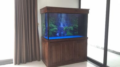 Photo of Bể cá rồng 133cm tại Hoàng Đạo Thành