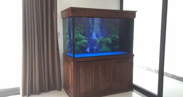 Hình ảnh Một sản phẩm của Thái Hoà Aquarium
