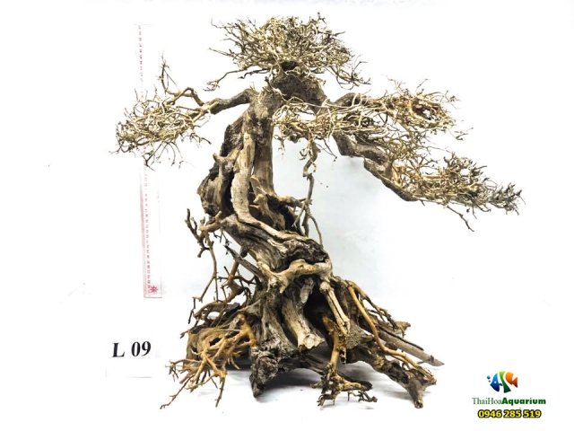 Hình ảnh Mẫu bonsai L09
