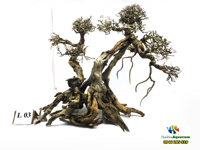 Hình ảnh Mẫu bonsai L03