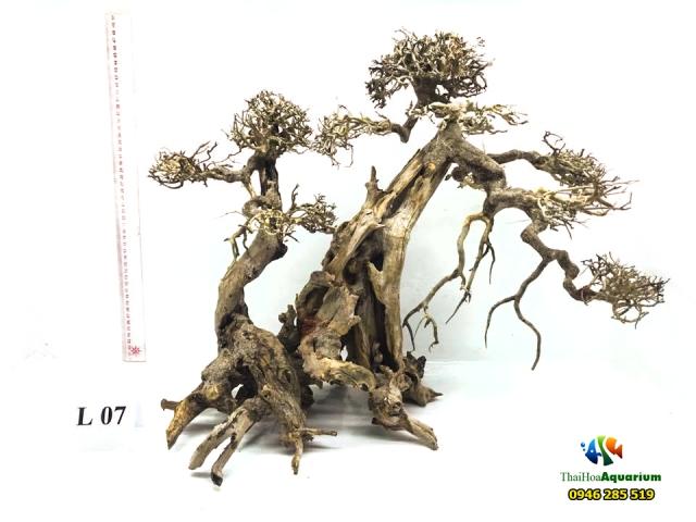 Hình ảnh Mẫu bonsai L07