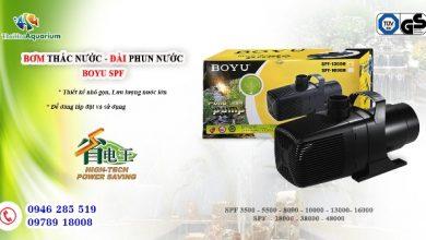 Photo of Bơm thác – đài phun Boyu SPF 3500- 5500- 8000- 10000- 13000- 16000- 28000- 38000- 48000