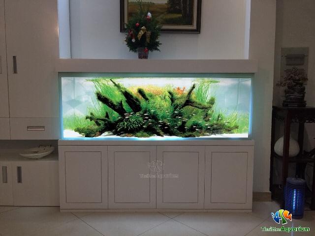 Hình ảnh Mẫu thiết kế bể thủy sinh số 3