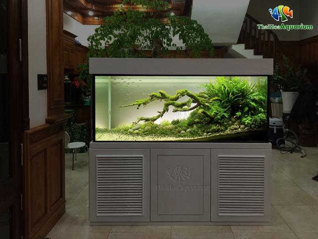 Hình ảnh Mẫu thiết kế bể thủy sinh số 1