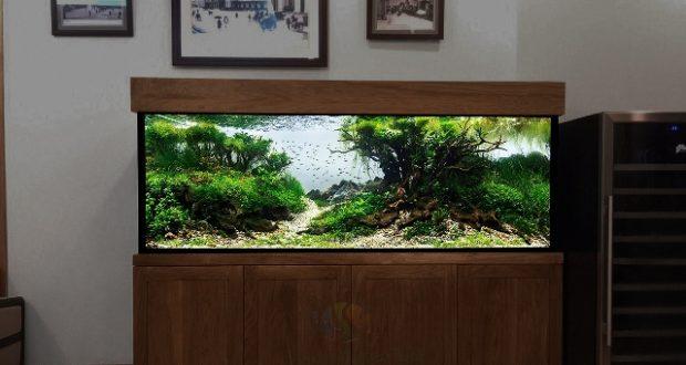 Hình ảnh Mẫu thiết kế bể thủy sinh số 6