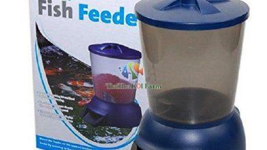 Photo of Hướng dẫn cài đặt máy cho cá Koi ăn tự động Jebao Auto Feeder