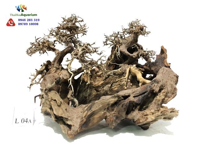 Hình ảnh Lũa Thế Bonsai L04A