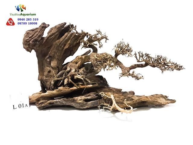 Hình ảnh Lũa Thế Bonsai L01A
